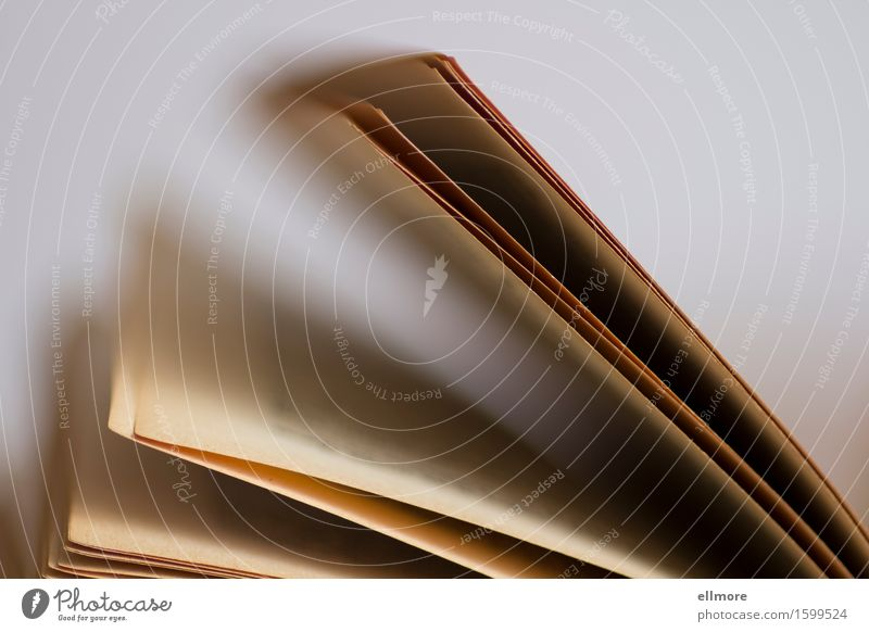 Seiten Printmedien Buch Papier Sammlerstück alt ästhetisch einfach ruhig Bildung Kultur Nostalgie blättern Buchseite hell beige bräunlich Farbfoto
