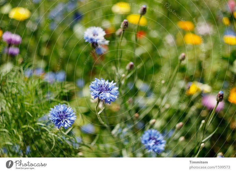 Mehr Blümchen. Natur Pflanze Sommer Schönes Wetter Blume Gras Blüte Garten Blühend Wachstum ästhetisch natürlich blau mehrfarbig gelb grün rosa Stengel Farbfoto