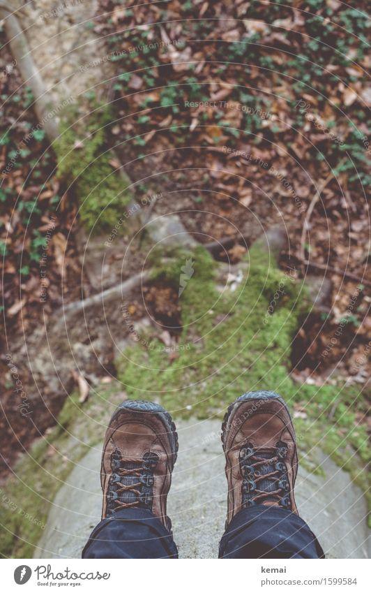Upside down Natur Baum Erholung Blatt Wald Umwelt Frühling Freizeit & Hobby sitzen Abenteuer Pause Baumstamm hängen Moos Wurzel Wanderschuhe
