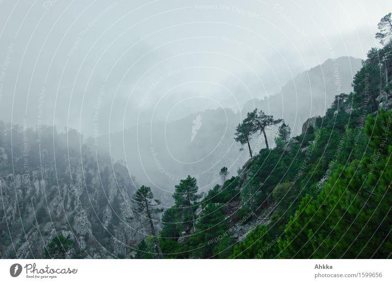 Dunstwege III exotisch Ferien & Urlaub & Reisen Abenteuer Wolken schlechtes Wetter Nebel Baum Felsen Berge u. Gebirge berühren entdecken träumen fantastisch