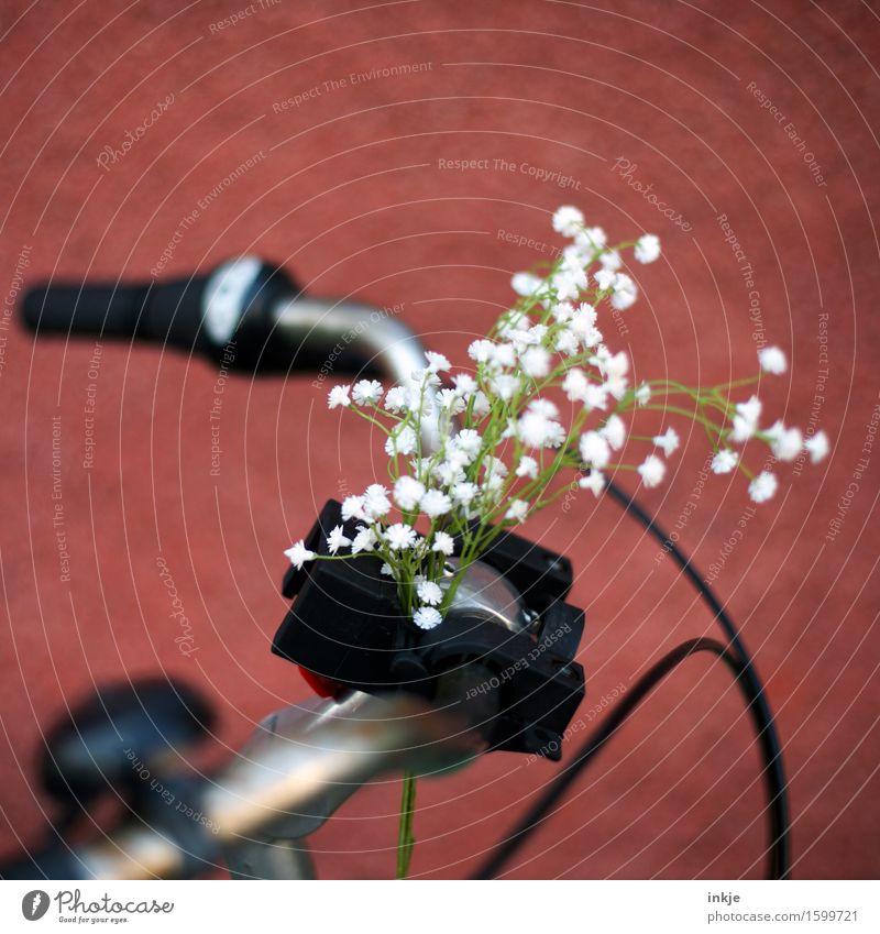Blümchen Lifestyle Stil Freizeit & Hobby Fahrradfahren Frühling Sommer Blume Dekoration & Verzierung Blumenstrauß Fahrradlenker Kunststoff schön Kitsch rot