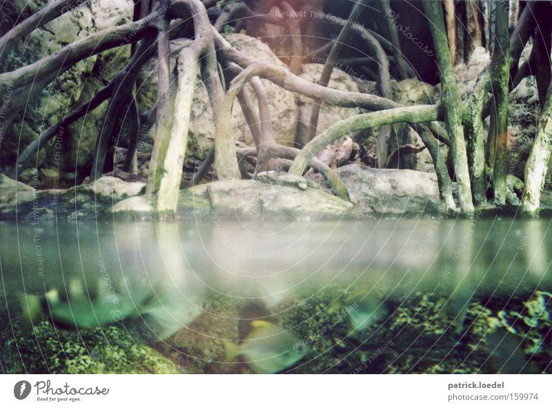 Apocalypse Now! Natur Wasser Ferien & Urlaub & Reisen Tier Küste Fisch Schwimmen & Baden Unterwasseraufnahme bedrohlich Fluss Tiergruppe Ast tauchen beobachten