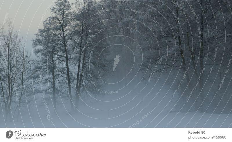 Die Ruhe im Nebel Natur Baum Winter Schnee Silhouette Trauer Landschaft Querformat Ruhe Stille