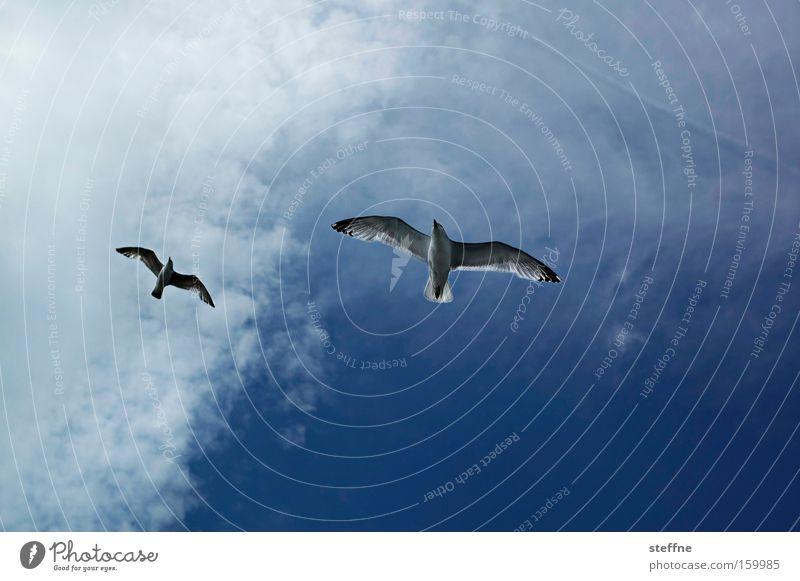 freiflug Himmel Meer Strand Ferien & Urlaub & Reisen Wolken Freiheit Vogel fliegen Luftverkehr Möwe gleiten Lachmöwe