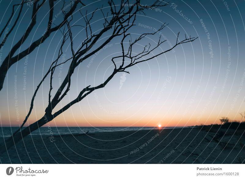 Seaside schön Wohlgefühl Sinnesorgane Erholung Ferien & Urlaub & Reisen Abenteuer Freiheit Strand Umwelt Natur Landschaft Pflanze Himmel Sonne Sonnenaufgang