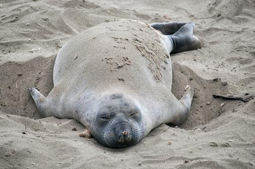Feierabend Natur Sommer schön Meer Erholung ruhig Tier Strand Leben Küste Sand Tourismus wild Wetter Zufriedenheit groß