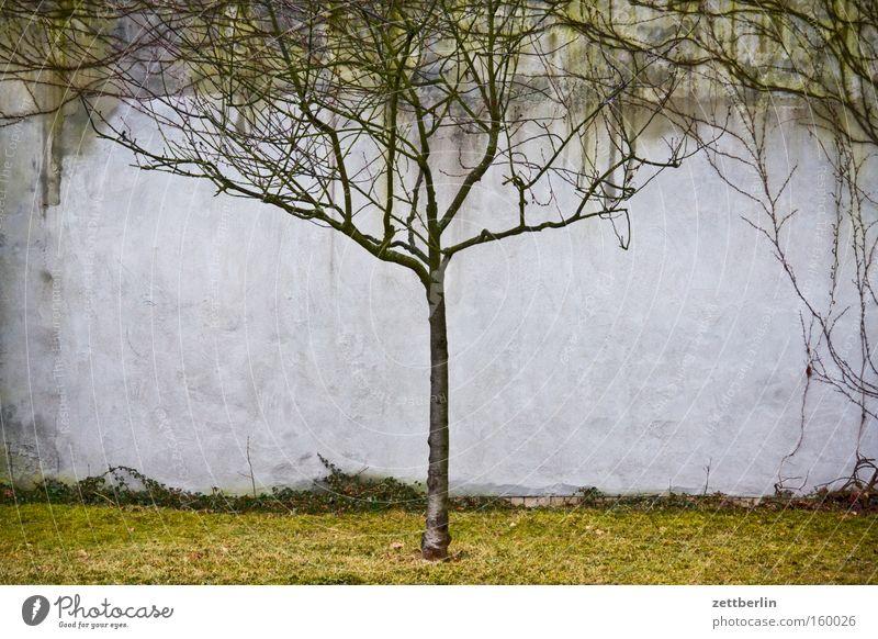 Einzelbaum Baum Blatt Einsamkeit Erholung Frühling Park Ast Mitte Jahreszeiten Baumstamm Zweig zentral Kirschbaum