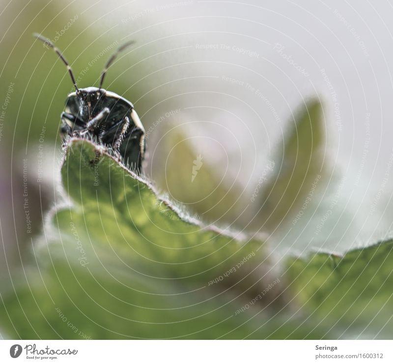 Aussichtspunkt Natur Pflanze Tier Frühling Efeu Farn Blatt Wildtier Käfer Tiergesicht 1 krabbeln Insekt Farbfoto Gedeckte Farben mehrfarbig Außenaufnahme