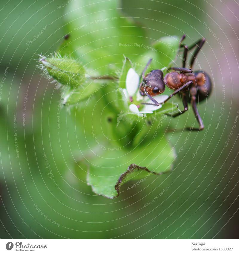 Acrobatic einer A-Meise Pflanze Gras Sträucher Blatt Blüte Wildpflanze Tier Nutztier Wildtier Käfer Tiergesicht Flügel 1 Arbeit & Erwerbstätigkeit krabbeln