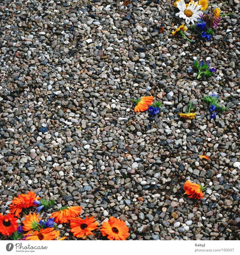 Blumen streuen... Traurigkeit Vergänglichkeit verloren vergessen Braut Farbfleck Bräutigam Hochzeitstag (Jahrestag)