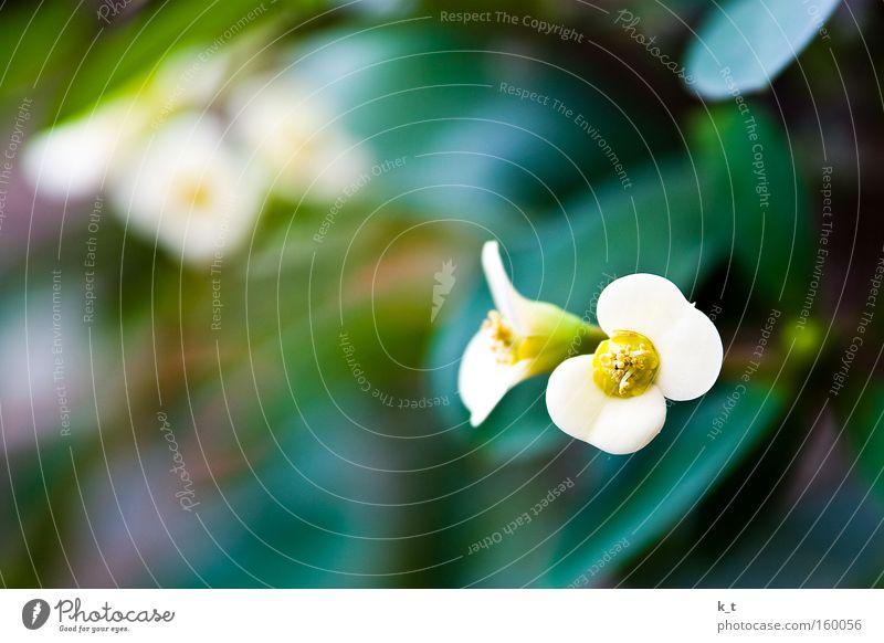 Die Kunst der Natur weiß Blume grün Pflanze gelb Farbe
