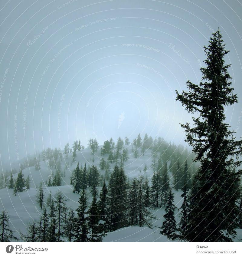 ^| Wald Baum Nadelwald Hügel Berge u. Gebirge Schnee Winter Ast Nebel Dunst Himmel bedeckt Landschaft ruhig
