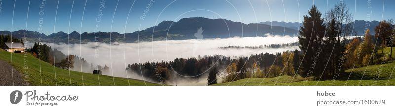 Nebelmeer über Egg Landschaft Himmel Horizont Sonnenlicht Herbst Schönes Wetter Baum Gras Sträucher Feld Wald Hügel Alpen Berge u. Gebirge Gipfel Dorf
