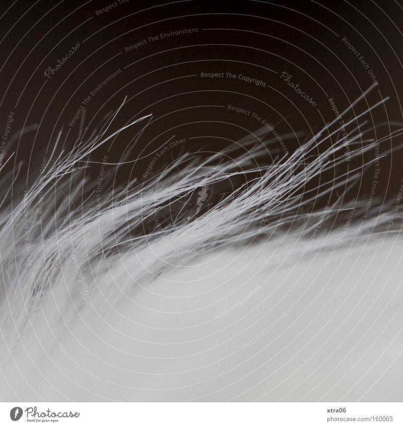 borstig-weich weiß Fell Faser Härchen
