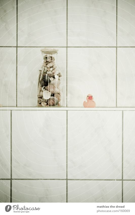 NICHT OHNE MEINE QUIETSCHEENTE schön Freude Vogel Glas Glas Bad Schwimmen & Baden Spielzeug Fliesen u. Kacheln Stillleben Muschel Ente Gummi Badeente