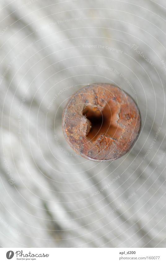 Die Schraube auf dem Kopf treffen Arbeit & Erwerbstätigkeit Holz Rücken Rost Holzbrett Maserung Befestigung Makroaufnahme