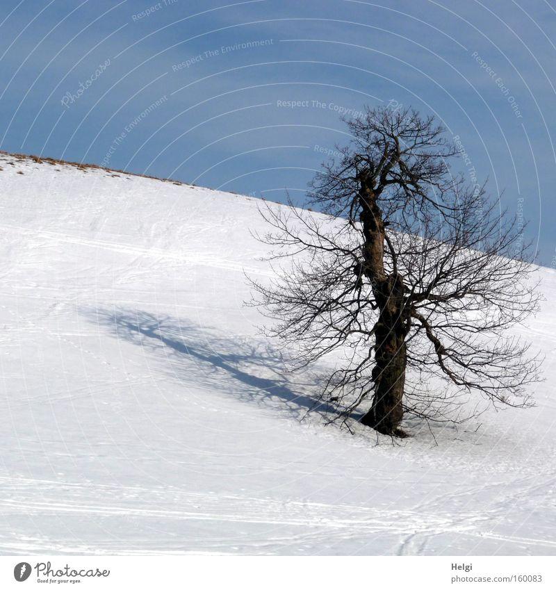 sonniger Wintertag... kalt Schnee Frost Baum Baumstamm eigenwillig Schatten Berge u. Gebirge Himmel weiß blau Helgi