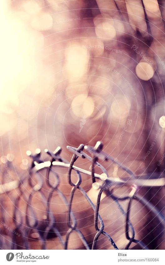 Traum vom Zaun. Sonne Blatt Herbst Metall rosa Metallwaren Zaun Neigung Maschendraht