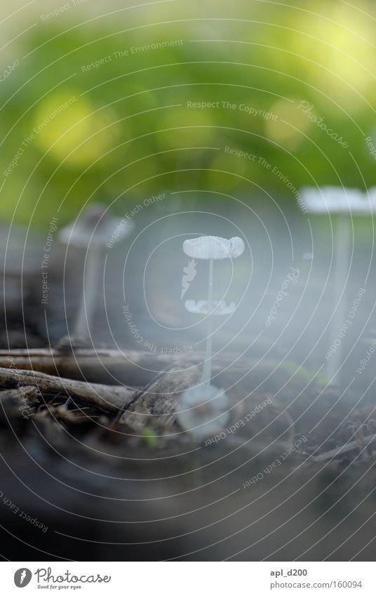 Psycho Pilz zwei grün Wiese Garten Park braun