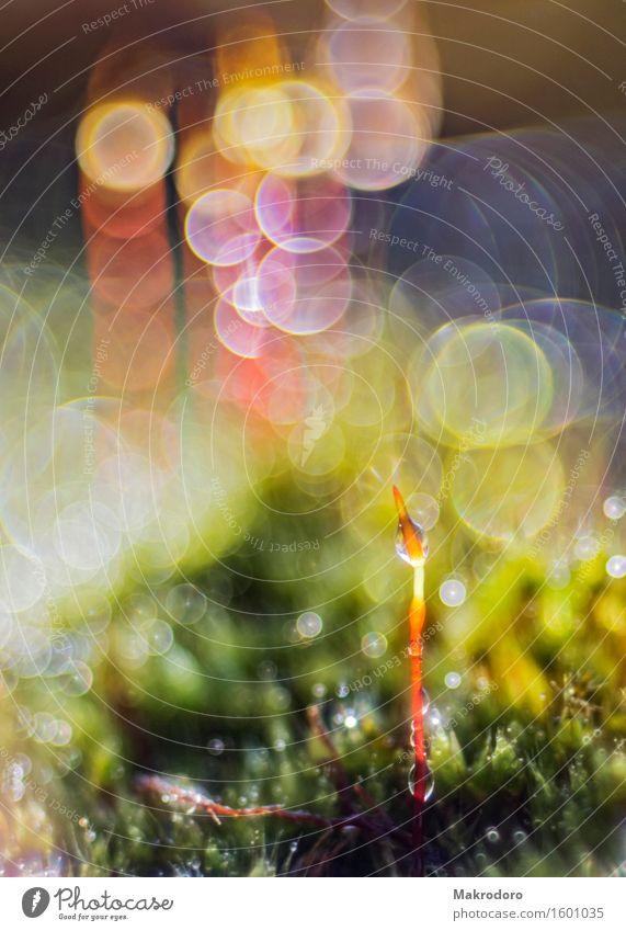 Licht im Moos Natur Pflanze Wassertropfen Sonnenlicht Fröhlichkeit Gefühle Freude Glück Zufriedenheit Lebensfreude Frühlingsgefühle Vorfreude Begeisterung Farbe