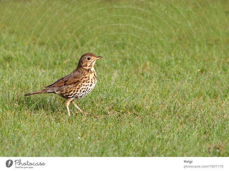 weiter gehts... Natur Pflanze grün weiß Einsamkeit Tier Umwelt Leben Frühling Bewegung natürlich Gras Garten Freiheit braun Vogel