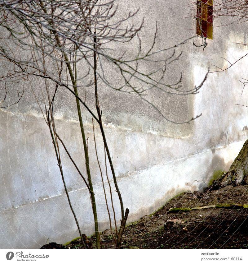Caputh Baum Baumstamm Wand Mauer Putz Dorf Langeweile Öffentlicher Dienst einstein