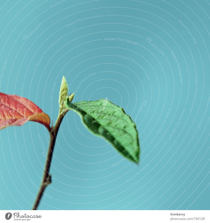 rot grün koalition Herbst Zweig Blatt Pflanze Jahreszeiten Baum Natur Hintergrundbild Park Garten Trieb Wachstum gedeihen Gartenbau garten und landschaftsbau