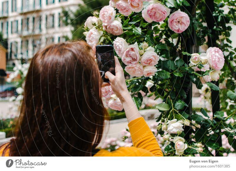 Rosengarten Fotografie Ausflug Sommer feminin Kopf Haare & Frisuren 1 Mensch 18-30 Jahre Jugendliche Erwachsene Blume Garten Park Kleinstadt Stadt langhaarig