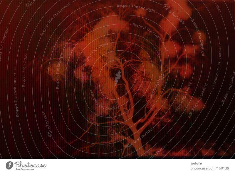 leuchttischmonitor Natur Baum Winter Landschaft braun Filmmaterial Ast Streifen analog Bildschirm Baumstamm negativ Mistel Leuchttisch