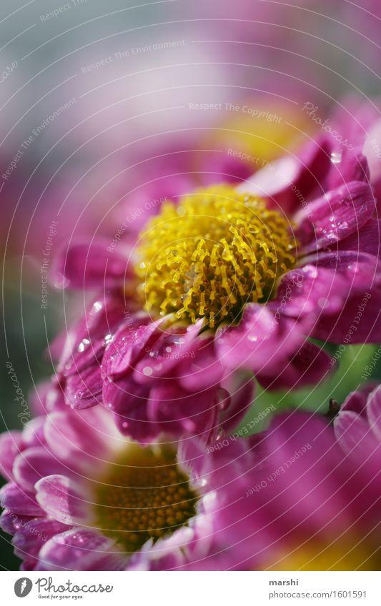 Regentröpfchen Natur Pflanze Frühling Sommer Blume Blatt Blüte Stimmung Blühend violett gelb Garten Gartenarbeit Farbfoto Außenaufnahme Nahaufnahme