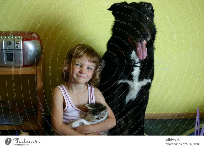 Haustiere Hund Katze Kind schwarz weiß Tier Unterhemd Mädchen Innenaufnahme grün Freude Vertrauen Säugetier auf Arm im Kinderzimmer