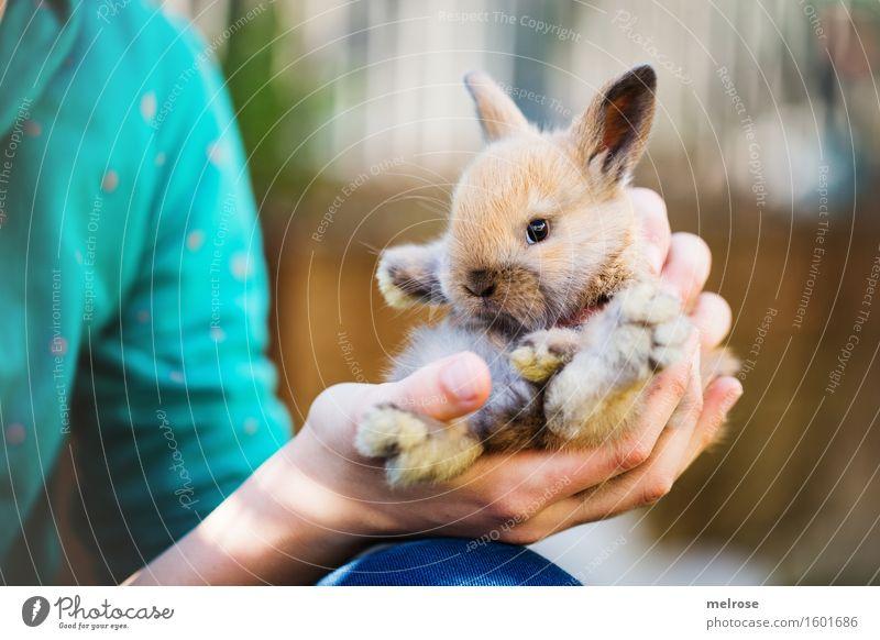 kleiner Racker II Mensch Kind blau schön Hand Erholung Tier Mädchen Tierjunges braun Zufriedenheit sitzen Kindheit Arme genießen Finger