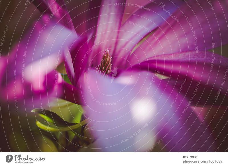 Eintauchen ... Natur Stadt Pflanze grün schön Blume Erholung Blatt Blüte Frühling Stil Garten Stimmung braun rosa elegant