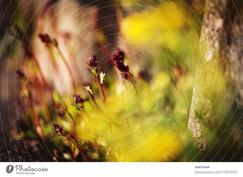 Märchenwelt elegant Stil Natur Frühling Schönes Wetter Pflanze Blume Blatt Blüte Wildpflanze Gartenpflanzen Blütenpflanze Blütenstiel Pflanzenteile Farbstoff