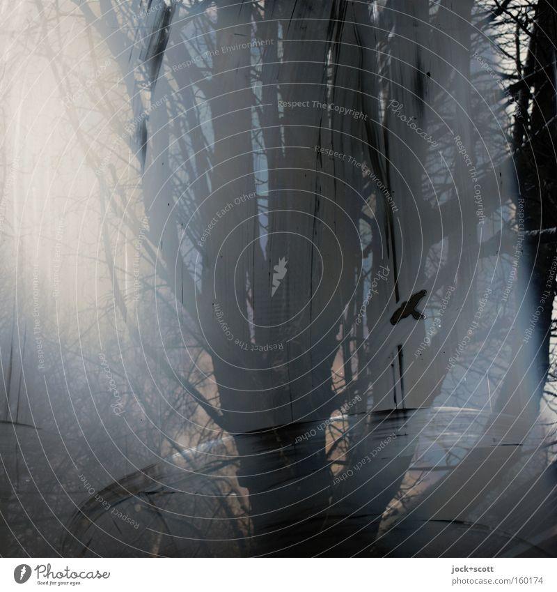 Schaufenster Große Schmiere Umwelt Winter Baum Fenster Vogel Glas Streifen leuchten dunkel Flüssigkeit kalt natürlich schwarz Stimmung Verschwiegenheit ruhig