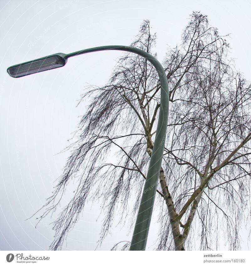 Allergie Beleuchtung Ast Laterne Baumstamm Zweig Pollen Birke Allergiker Peitschenlaterne