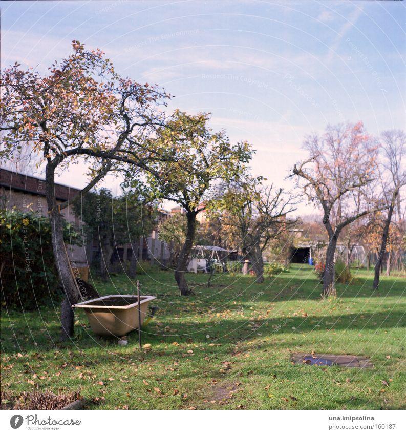 pool blau grün Baum Erholung Gras Garten Freizeit & Hobby Badewanne Schwimmbad Schrebergarten Gärtner Raum