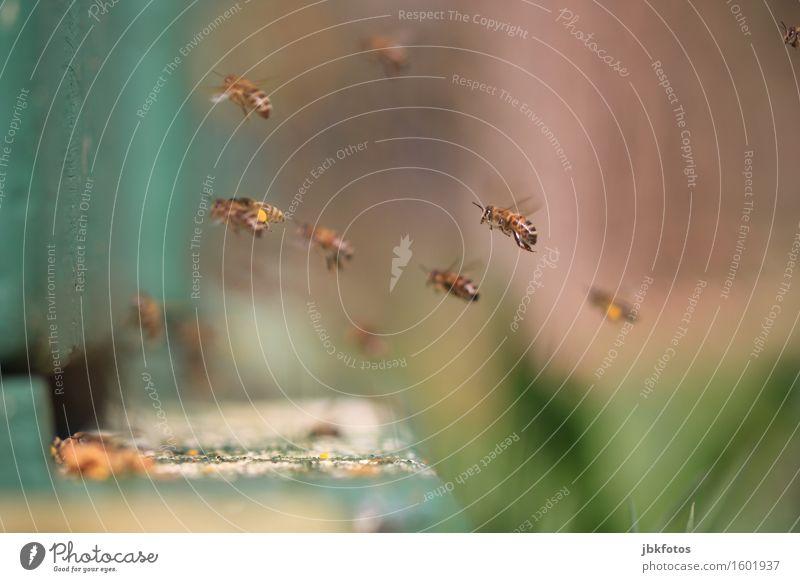 steil abgehoben Lebensmittel Ernährung Umwelt Natur Klima Tier Biene Gefühle Stimmung Freude Glück Fröhlichkeit Zufriedenheit Lebensfreude Frühlingsgefühle