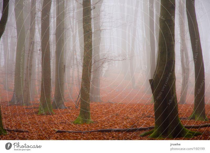 Nebelwald Blatt Nebel Winter ruhig
