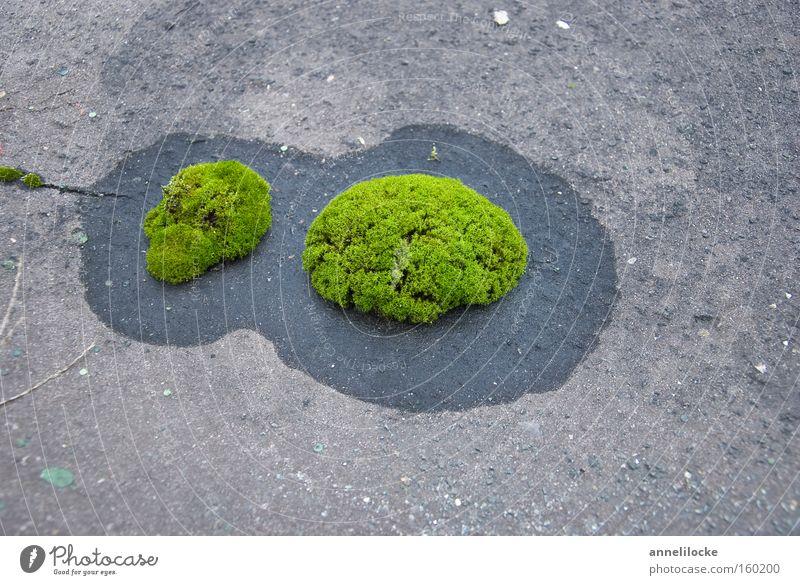 reif für die Insel.. Inseln Ferien & Urlaub & Reisen Meer Moos grün Wasser frisch Wachstum Pflanze Beton Dach weich sanft Kreis Stein Hoffnung Erfolg Mineralien