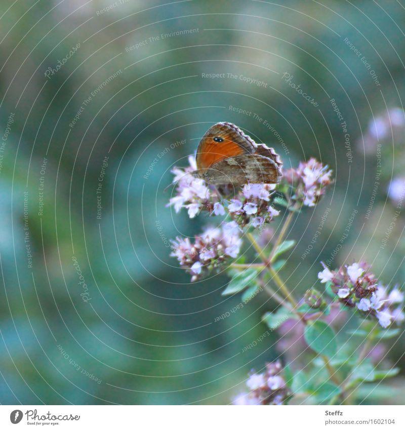 summer life Natur Pflanze schön grün Sommer Blume klein Idylle Schmetterling Leichtigkeit leicht sommerlich Wildpflanze Unbeschwertheit dunkelgrün Augenfalter