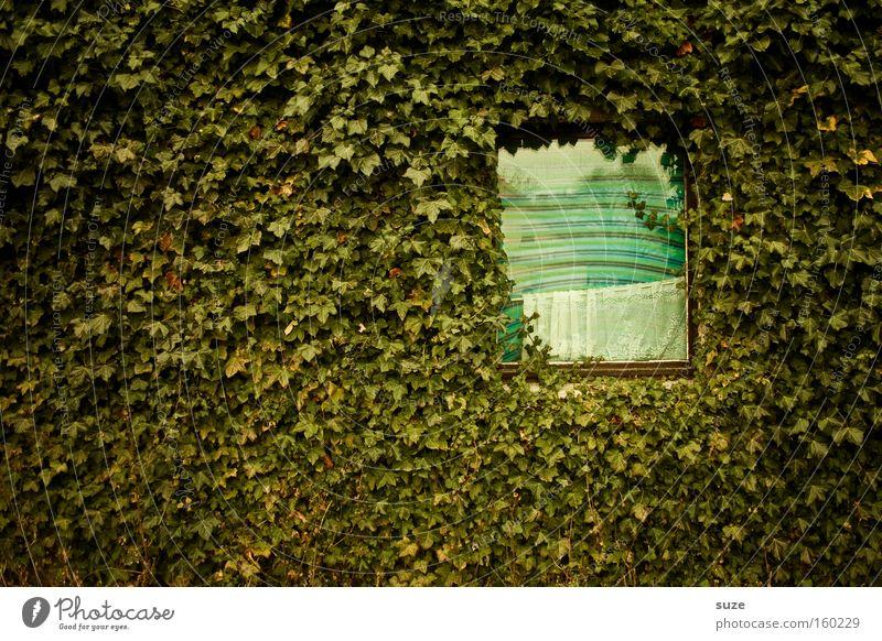 2 ZKB mit Blick ins Grüne grün Pflanze Blatt Haus Fenster Wand Mauer Wohnung Fassade Wachstum Sträucher Isolierung (Material) Efeu Grünpflanze Ranke