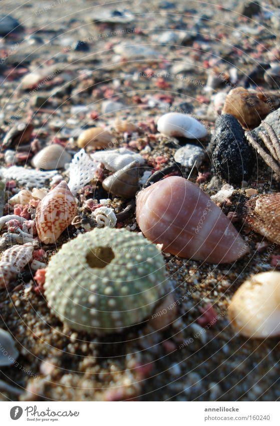 Strandgut Muschel Seeigel Stein Sand Ferien & Urlaub & Reisen Meer Insel Inseln Mittelmeer Sommer Sammlung Suche finden Fisch