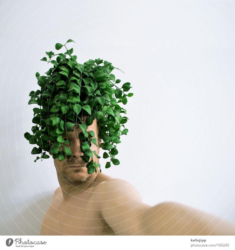 bubikopf Mensch Mann grün Pflanze Haare & Frisuren Locken Friseur Bioprodukte ökologisch Friseursalon Behaarung Porträt Biologische Landwirtschaft Stil