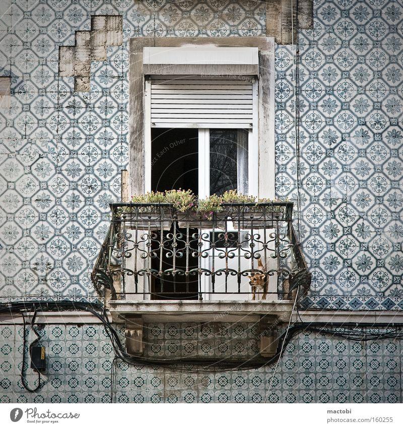little dog makes big noise Lissabon Portugal Balkon Hund Fliesen u. Kacheln Straße verfallen Fassade Krach Jalousie Detailaufnahme Gebell
