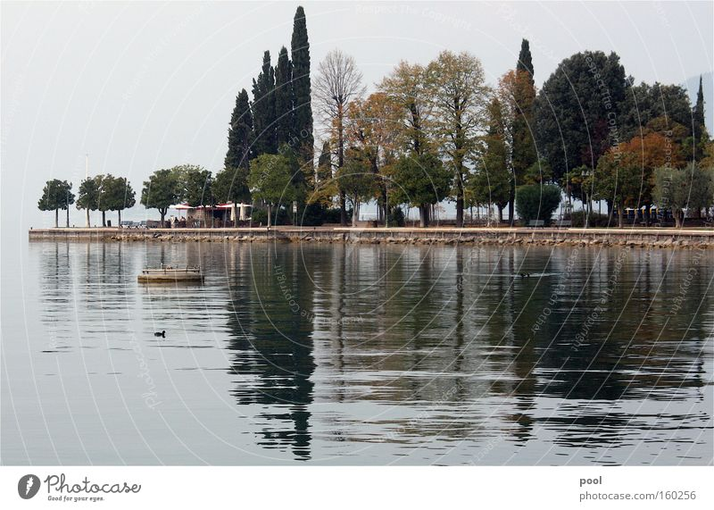 Lago di Garda Wasser Baum Herbst See Landschaft Wellen Nebel Italien Seeufer Gardasee Landzunge Bardolino