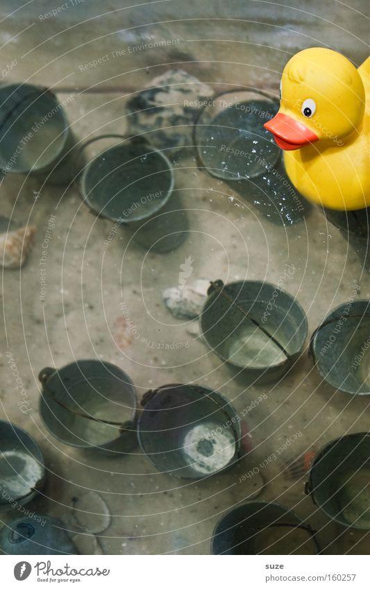 Quietsche-Entchen Wasser Meer Freude gelb Spielen Sand See lustig Schwimmen & Baden Kindheit verrückt Dekoration & Verzierung Spielzeug Ostsee Im Wasser treiben