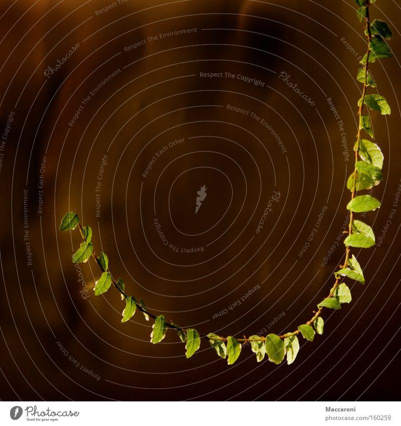 Angelhaken Pflanze grün Blume Blatt Lampe Ast Angeln Haushalt Farn Topfpflanze