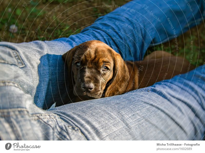 Nähe & Körperkontakt Mensch Hund Natur Mann blau Erholung Tier Erwachsene Tierjunges Beine klein braun Freundschaft liegen Wachstum beobachten