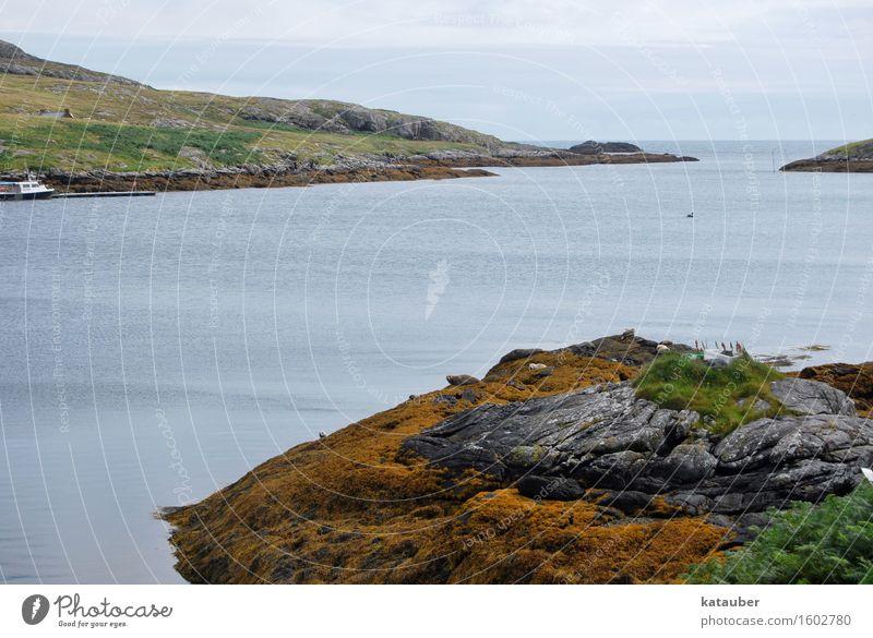 seehunde Landschaft Hügel Küste Bucht Seehund Tiergruppe liegen Schottland Hebriden eriskay Felsen Algen Meer Einsamkeit trist Farbfoto Außenaufnahme